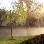 rainysunny