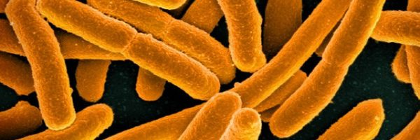 When Gut Bacteria Change Brain Function